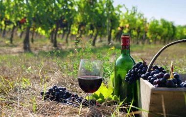 wine-1(4)